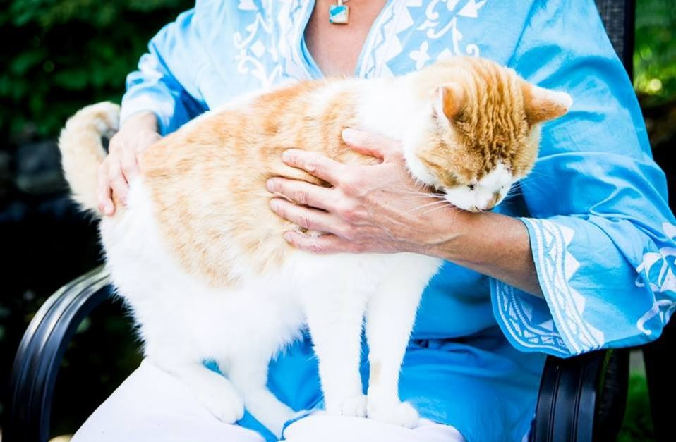 Cats and other pets can receive energy healing and Bowen therapy too